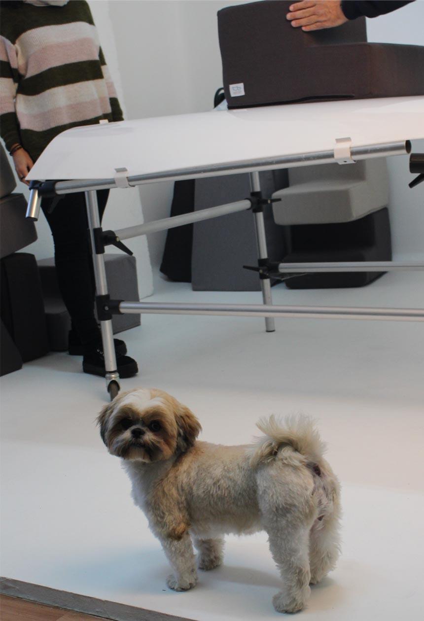 Perro mirando a cámara en un estudio de fotografía