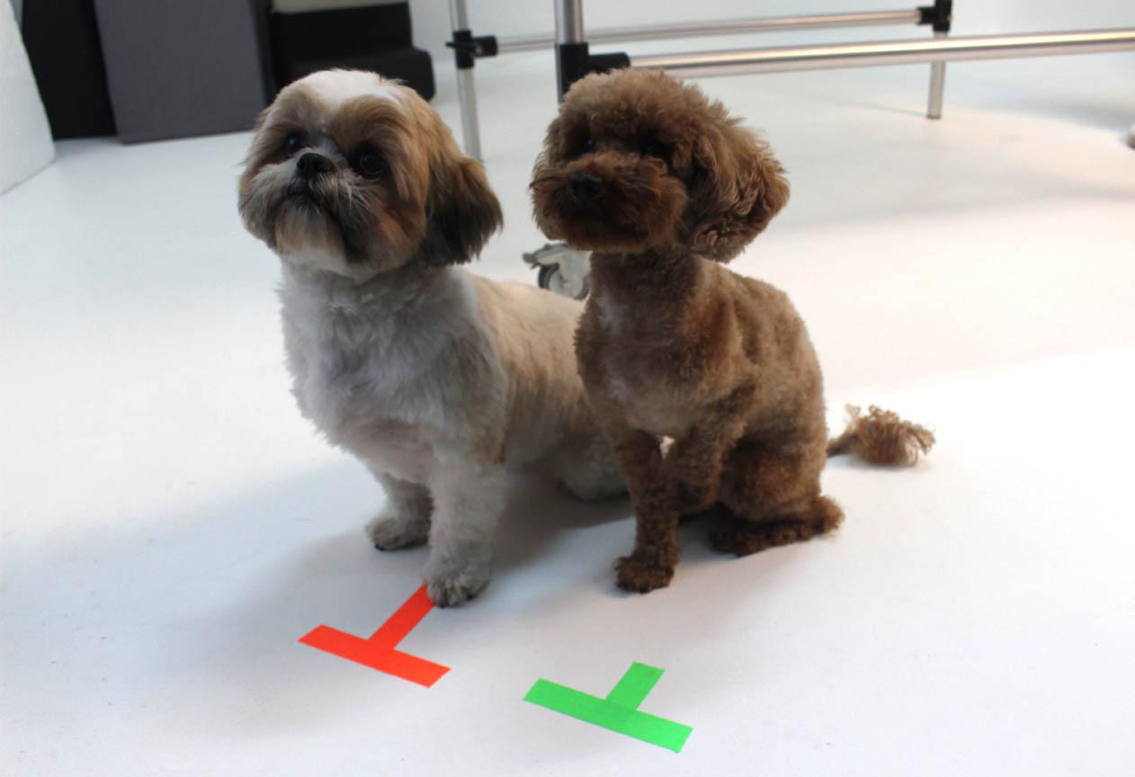 Dos perritos espera en su marca de cámara para la fotografía