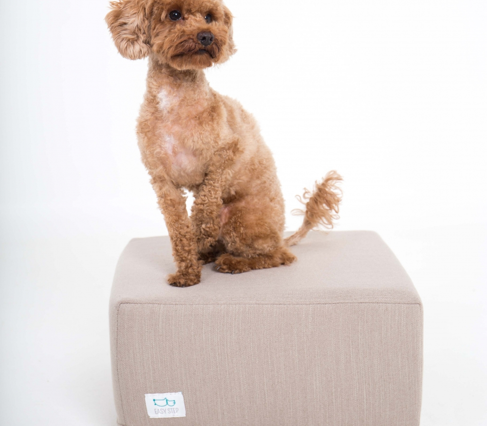 Perro canela caniche en step para mascotas