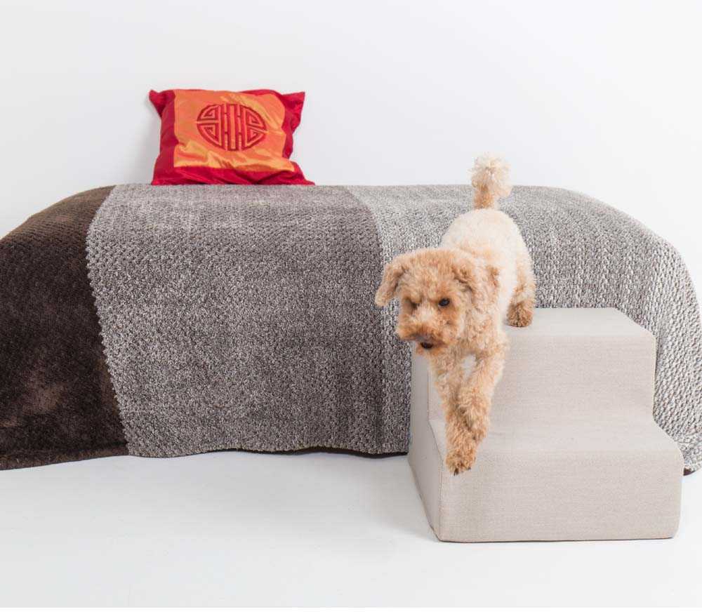 Caniche toy baja del sofá utilizando escalera de Easy Step