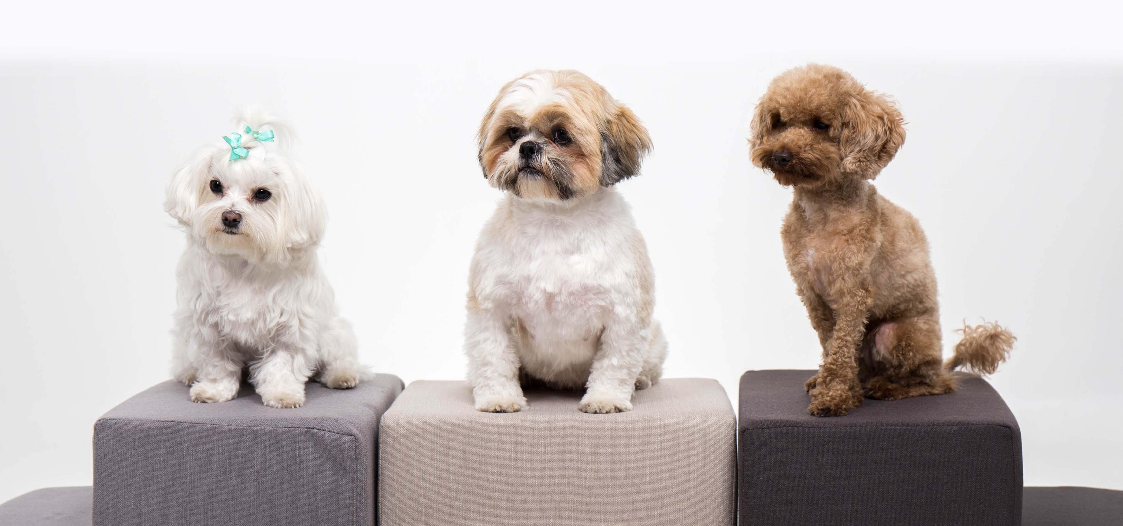 Tres perros miran a cámara subidos en las escaleras de Easy Step