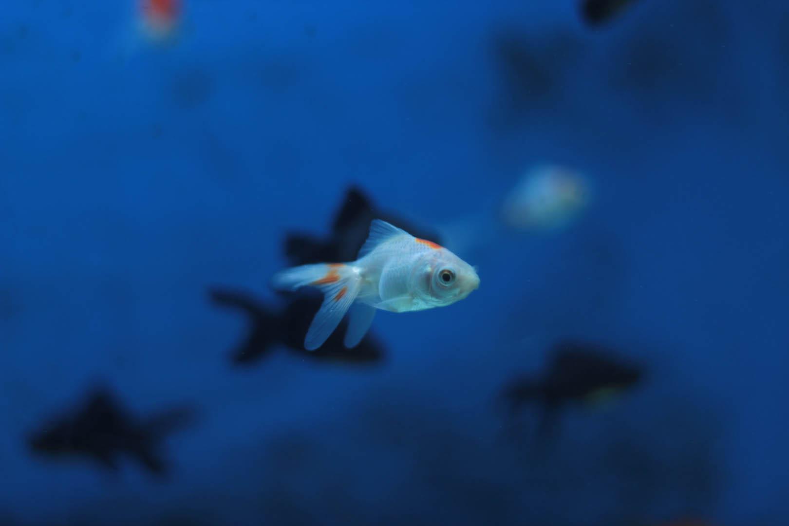 Precioso pez en la inmensidad del océano