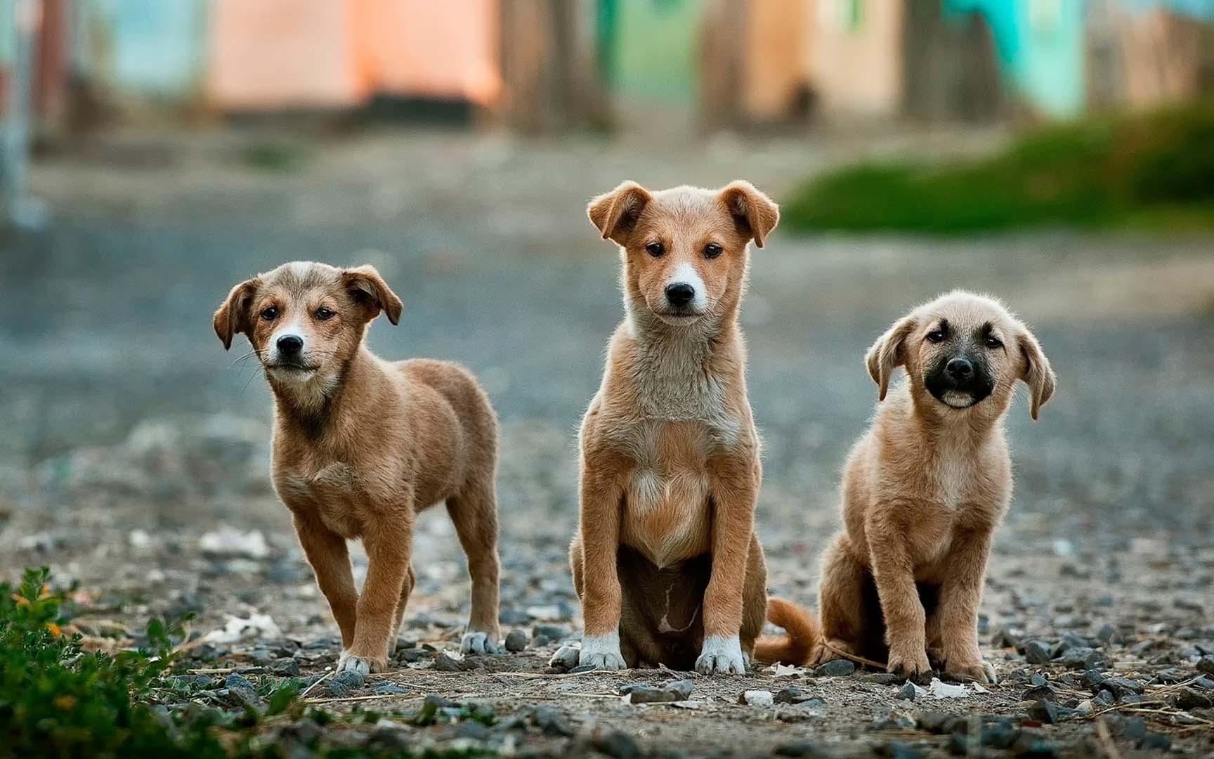 Tres perros mestizo miran a cámara con tres personalidades marcadas