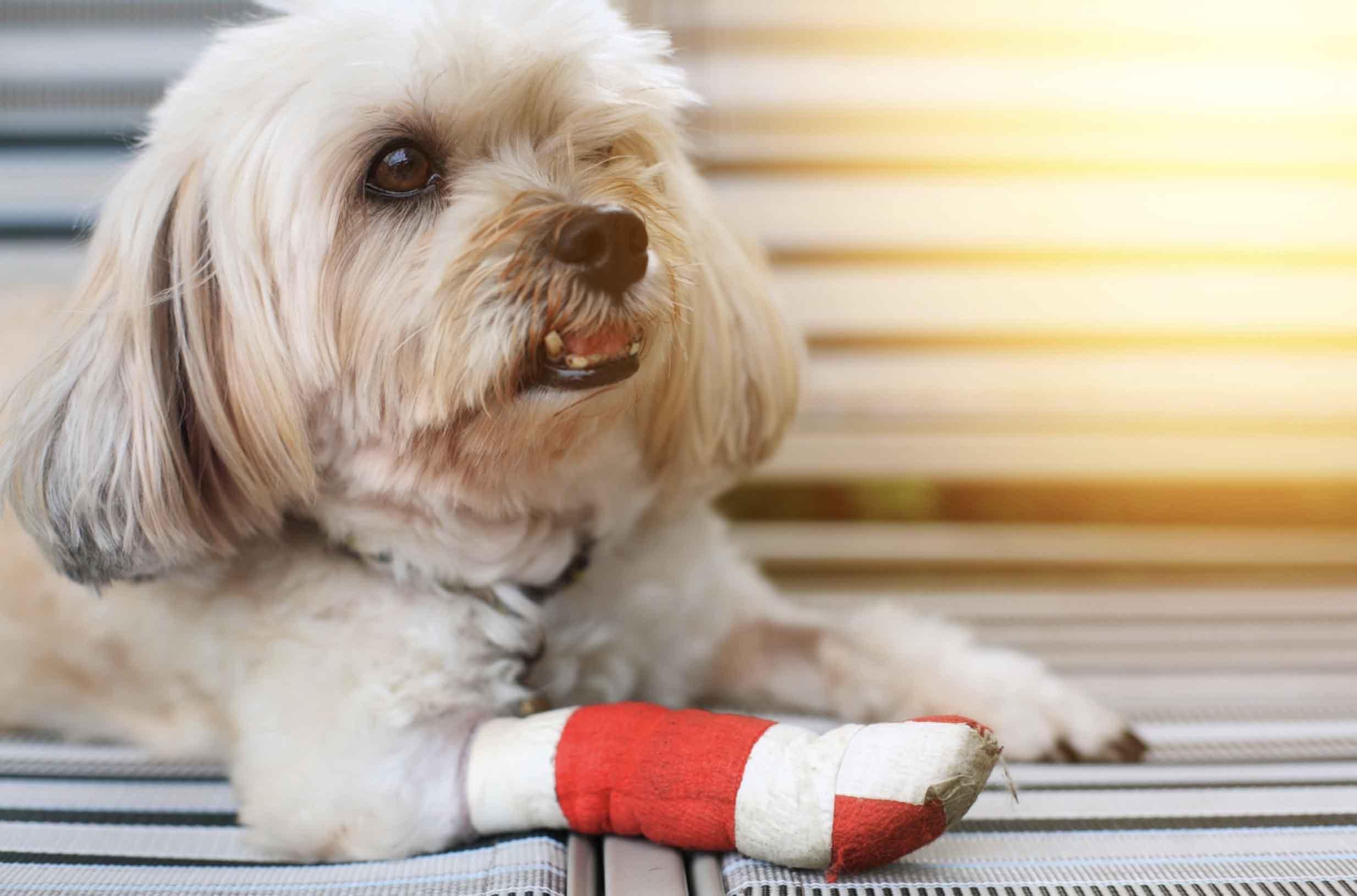 Las lesiones más frecuentes en perros y cómo evitarlas