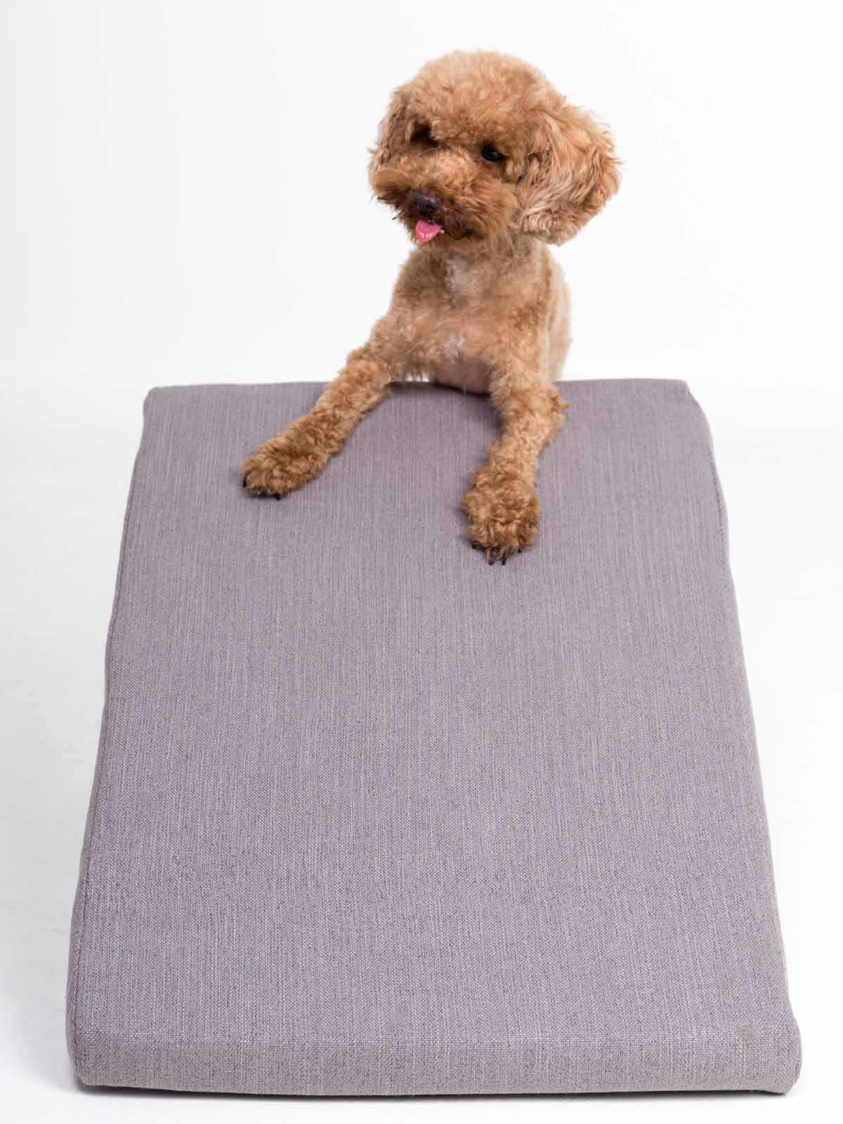 Perro apoyado en la rampa de color gris de Easy Step
