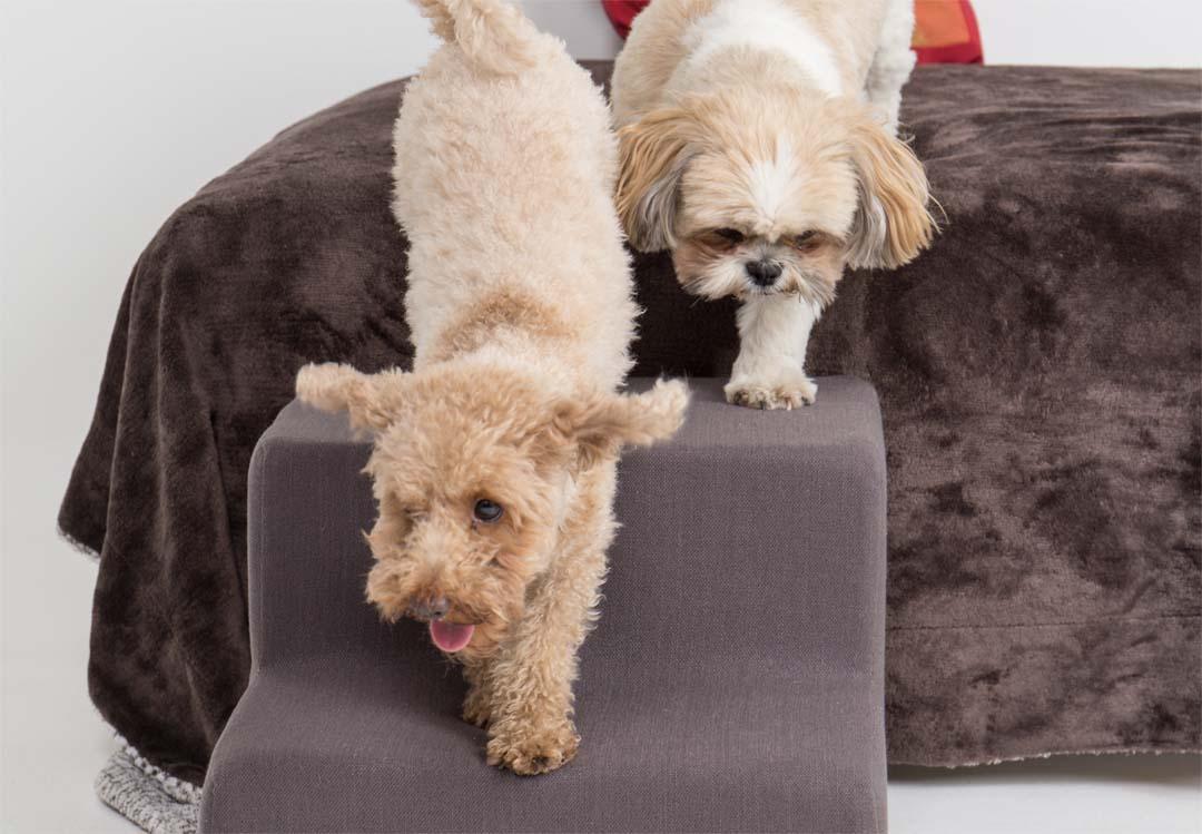 Caniche y Shitzsu bajando del sofá con la escalera para mascotas