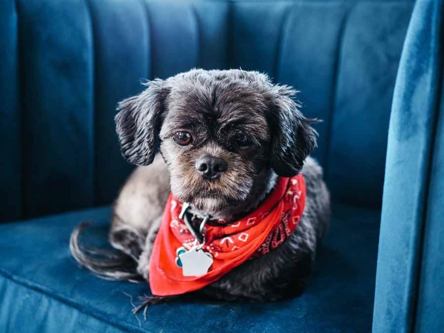 Facilitarles la vida a las mascotas sénior es posible