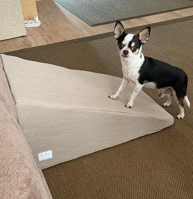 Rampa beige y perro pequeño