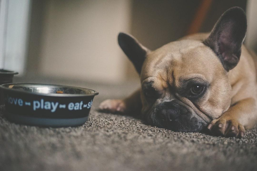 Perro espera junto a su comida