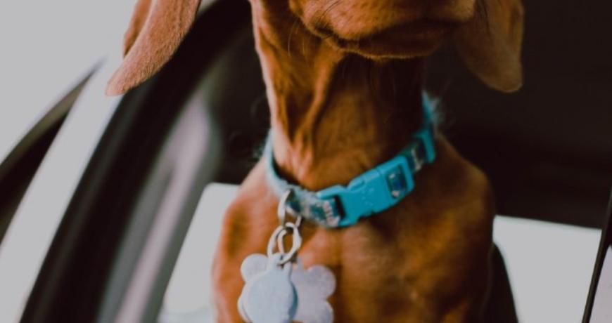 Chapa identificativa y GPS para mascotas