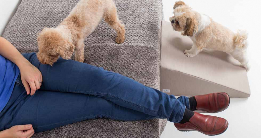 Dos perros suben por una rampa al sofá