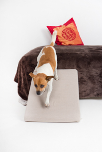 Perro bajando por rampa desde el sofá