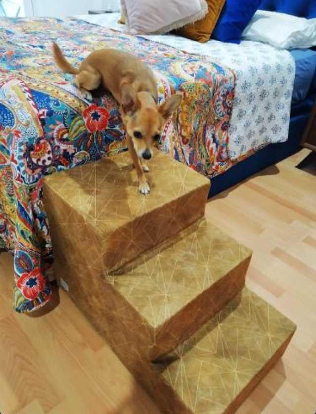 Si tu mascota no llega a la cama, la solución es la escalera para perros de Easy Step.