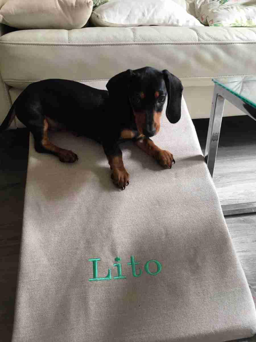 Las rampas para perros de Easy Step son ligeras, robustas y están hechas en España.